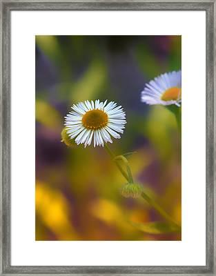 White Wildflower On Pastels Framed Print by Bill Tiepelman