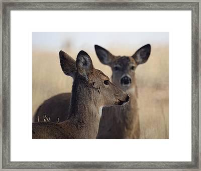 Whitetail Deer Framed Print by Ernie Echols