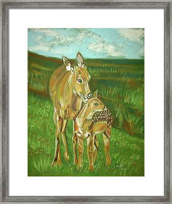 Whitetail Doe And Fawn Framed Print by John Keaton