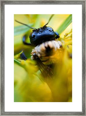Who Knew Bees Have Mustaches Framed Print by Beth Akerman