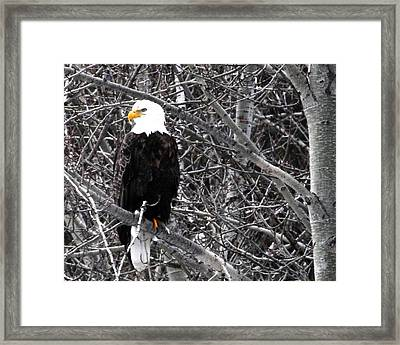 Who Me Framed Print by Don Mann