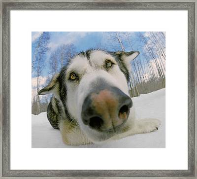 Wide Angle Dog Framed Print by Darwin Wiggett