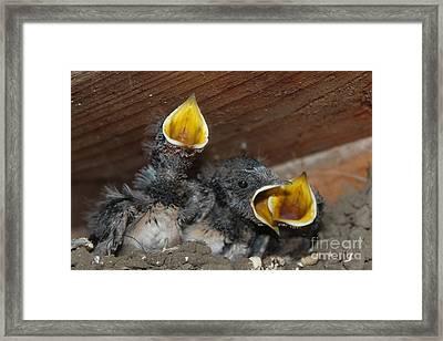 Wild Animals Baby Birds Www.pictat.ro Framed Print by Preda Bianca Angelica