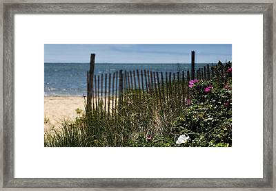 Wild Beach Rose - Cape Cod Framed Print by Thomas Schoeller