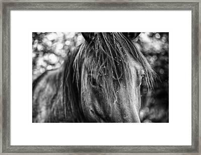 Wild Hair Framed Print by Toni Hopper