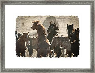 Wild Horse Battle D1713 Framed Print by Wes and Dotty Weber