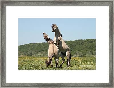Wild Horses Framed Print by Masterbrickert Photography