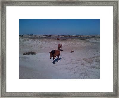 Wild Horses Of Shackleford Banks Framed Print by Tanya Moody