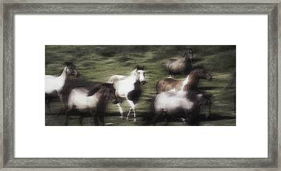 Wild Horses On The Move Framed Print by Don Hammond