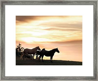 Wild Horses Sunset 3 Framed Print by Leland D Howard