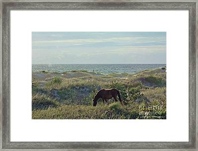 Wild Mustang Framed Print by Laurinda Bowling