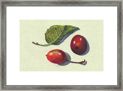 Wild Plums And Leaf Framed Print by Joyce Geleynse