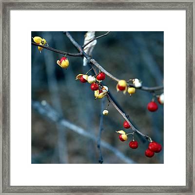 Wild Red Berries Out Of The Shell Framed Print by LeeAnn McLaneGoetz McLaneGoetzStudioLLCcom