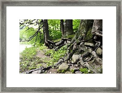 Wild Roots Framed Print by Doug Heavlow