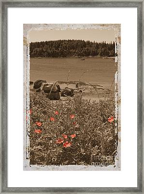 Wild Roses Framed Print by Jim Wright