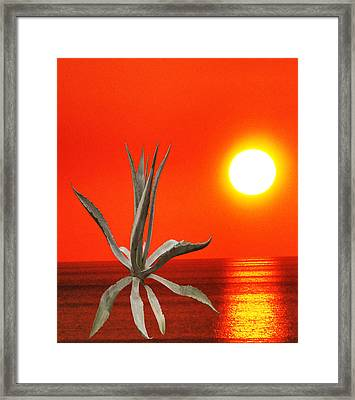 Wild Thing Framed Print by Eric Kempson