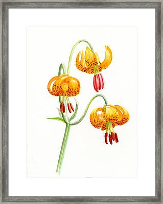 Wild Tiger Lilies Framed Print by Sharon Freeman