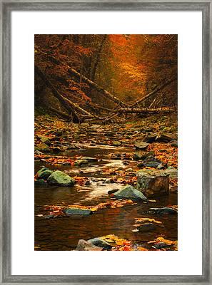 Wild Valley Framed Print by Irinel Cirlanaru