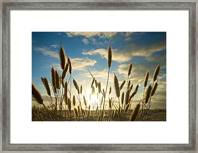 Wild Wheat Growing On The Shores Framed Print by Brooke Whatnall