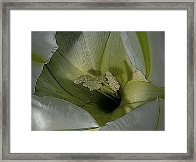 Wildflower Window Framed Print by Chris Berry