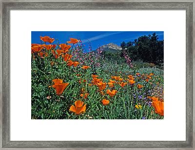 Wildflower Wonderland Framed Print by Kathy Yates