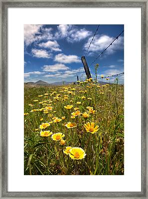 Wildflowers And Barbed Wire Framed Print by Peter Tellone