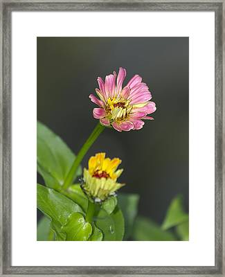 Wildflowers Framed Print by Betsy C Knapp