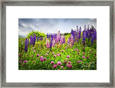 Wildflowers In Newfoundland Framed Print by Elena Elisseeva