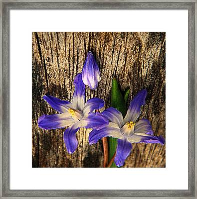 Wildflowers On Wood Framed Print by Chris Berry