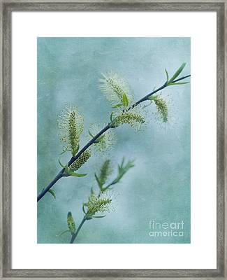 Willow Catkins Framed Print by Priska Wettstein