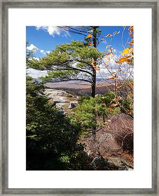 Windswept Pine Framed Print by Jim DeLillo