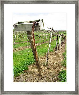 Wine Season Framed Print by Todd Sherlock