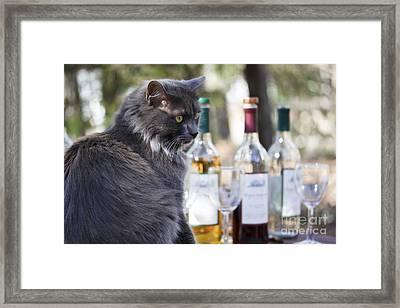 Wine Tasting Cat Framed Print by Nan Moore