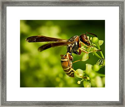 Winged Victory One Framed Print by Michael Putnam
