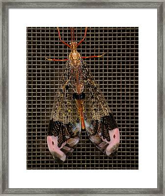 Wings Of Electricity Framed Print by DigiArt Diaries by Vicky B Fuller