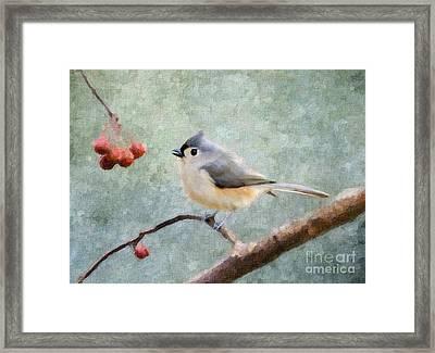 Winter Berries Framed Print by Betty LaRue