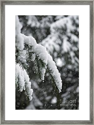 Winter Charm Framed Print by Gwyn Newcombe
