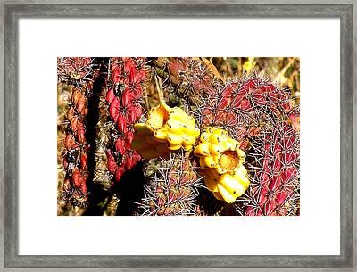 Winter Cholla Framed Print by FeVa  Fotos