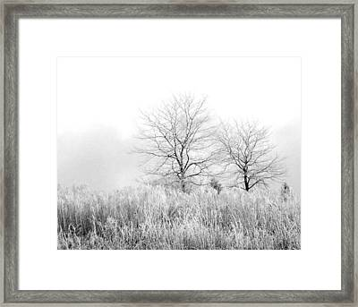 Winter Day Framed Print by Julie Palencia