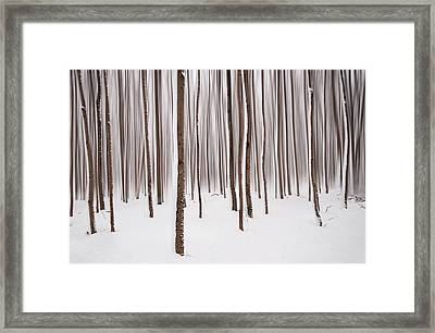 Winter Framed Print by Mircea Costina Photography