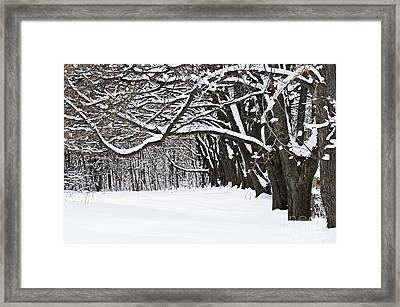Winter Park With Snow Covered Trees Framed Print by Elena Elisseeva