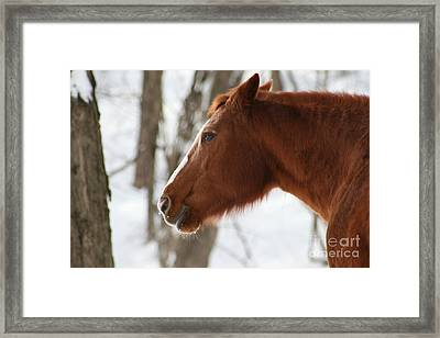 Winter Reflections Framed Print by Neal  Eslinger