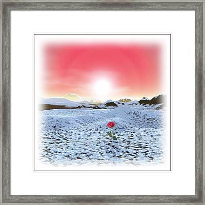 Winter Rose Framed Print by Harald Dastis