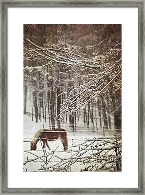 Winter Scene With Horse Grazing In Wooded Pasture Framed Print by Sandra Cunningham