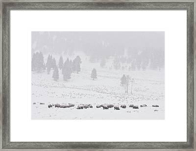 Winter Storm Framed Print by D Robert Franz