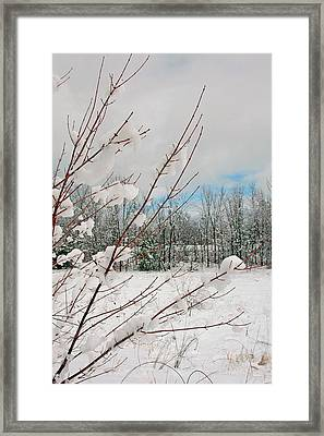 Winter Woods Framed Print by Joann Vitali