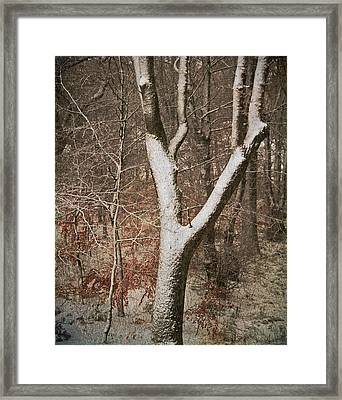 Winter Woods Framed Print by Odd Jeppesen