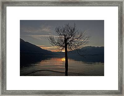 Wintertree In The Evening Framed Print by Joana Kruse