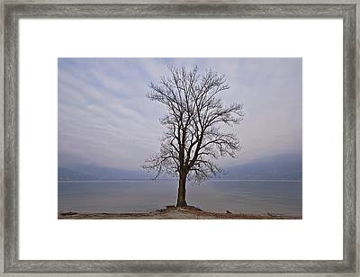 Wintertree Framed Print by Joana Kruse
