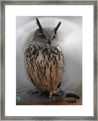 Wise Owl 3 Living In Spain Framed Print by Colette V Hera  Guggenheim